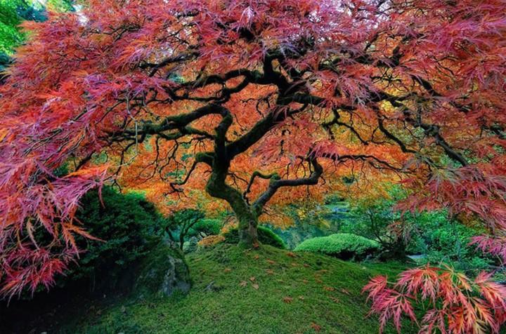أجمل ١٢ صورة أشجار على الإطلاق