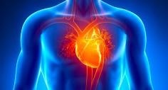 لماذا لا يصاب القلب بالسرطان؟