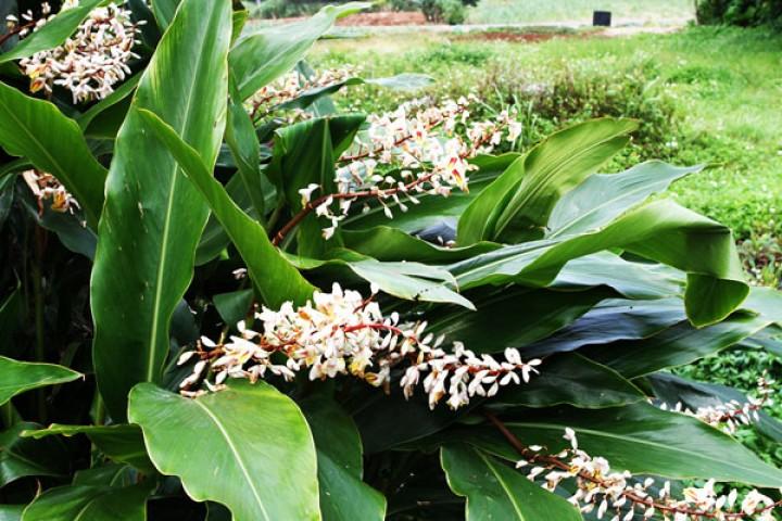 هذه النبتة تطيل العمر… إقرأ التفاصيل