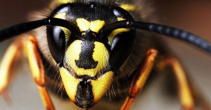 لسعة هذه الحشرة… تشفي من السرطان. إقرأ التفاصيل